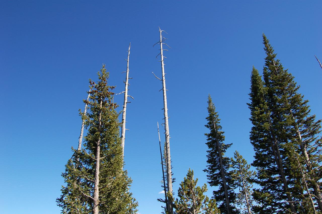 36_trees_6