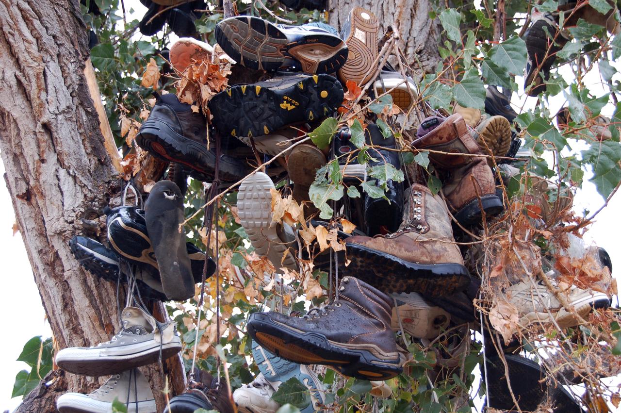 Weird shoe tree