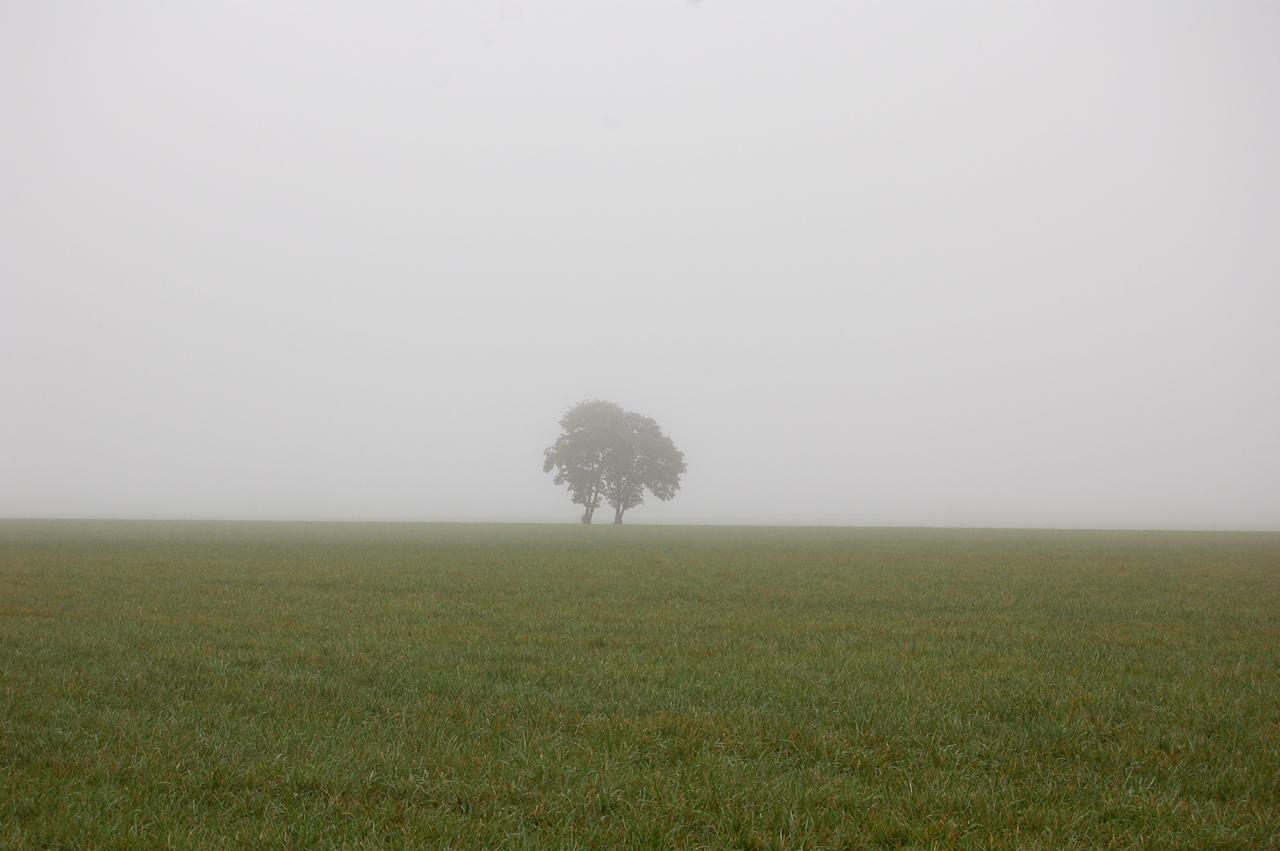 16_fog_14