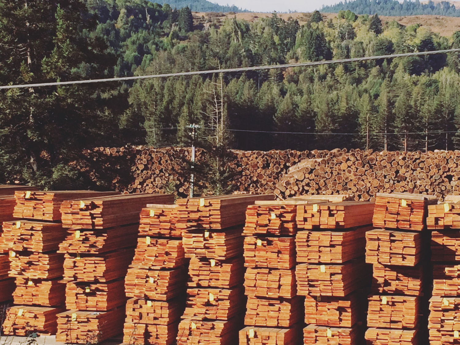 The size of this lumber yard was truly impressive. This is only a tiny sample.