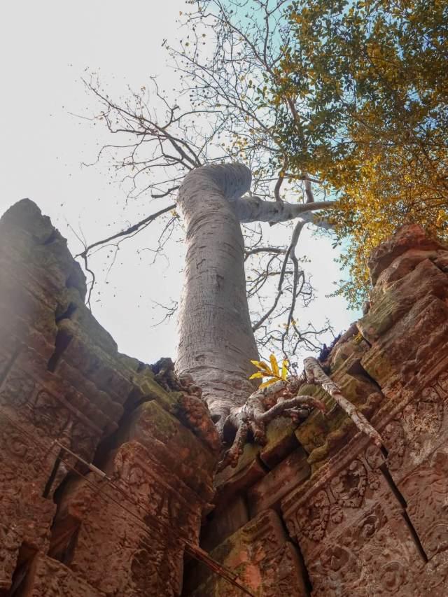 Ta Prohm Angkor Wat - Tomb Raider Temple Jungle Temple