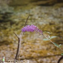 I fiori lungo il sentiero