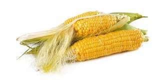 pappa di mais e tapioca bimby