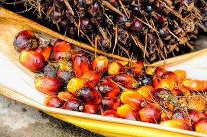 tipi di olio di palma