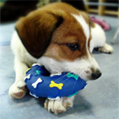 Noina Arka sudjeluje na seminaru britanske organizacije Dogs Trust