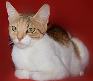 Posjetite naš štand na izložbi mačaka u King Crossu!