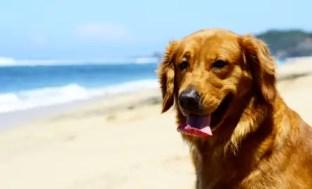 cane-spiaggia-sole-caldo