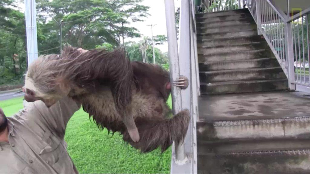 demon-possessed sloth (2)