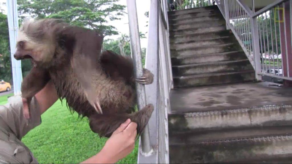 demon-possessed sloth (4)
