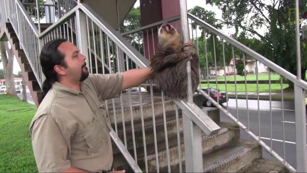 demon-possessed sloth (8)