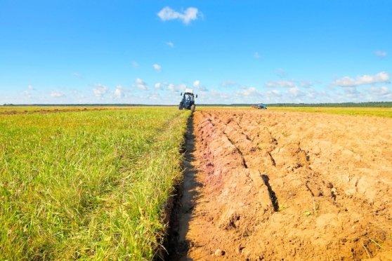 campo agricolo