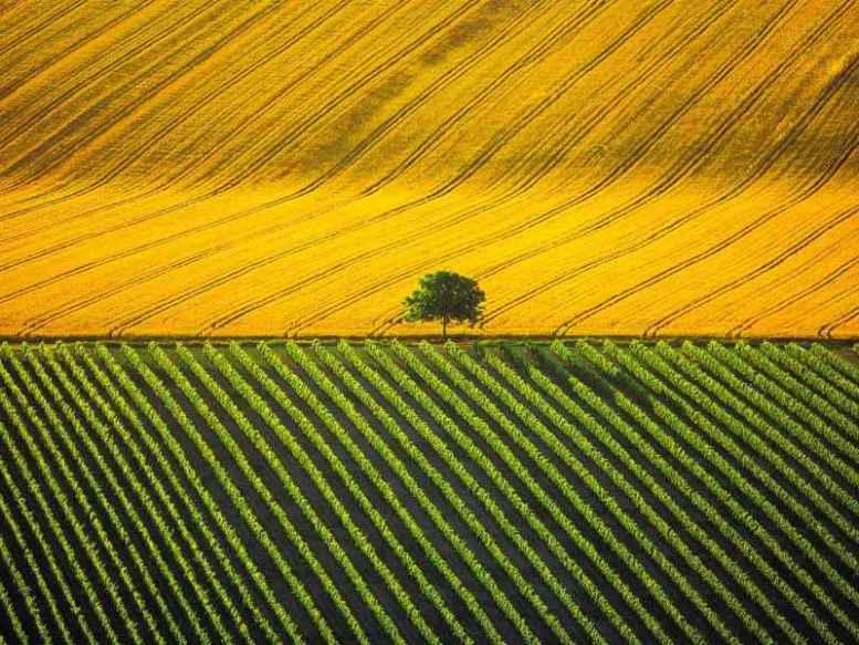 campo coltivato giallo e verde