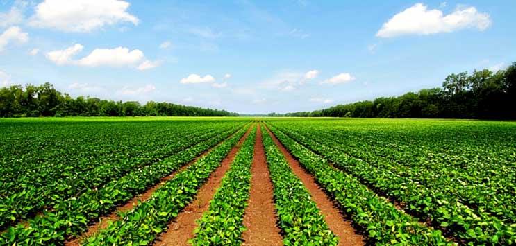 coltivazione all'aria aperta