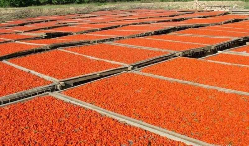 Colture redditizie le bacche di goji come coltivarle in for Coltivazione goji in vaso