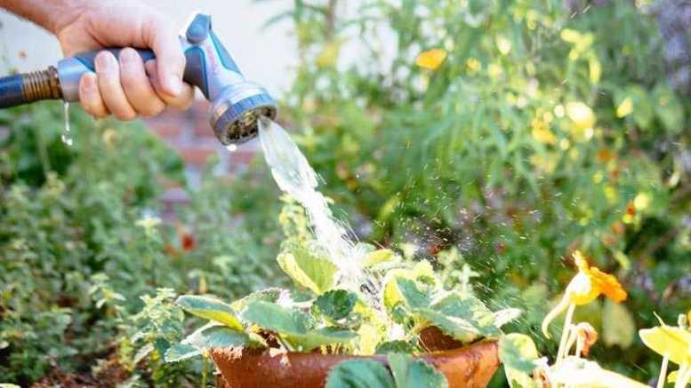 stress da caldo nelle piante