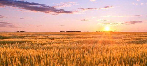 aprire un'azienda agricola incentivi
