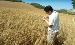 coltivazione cereali