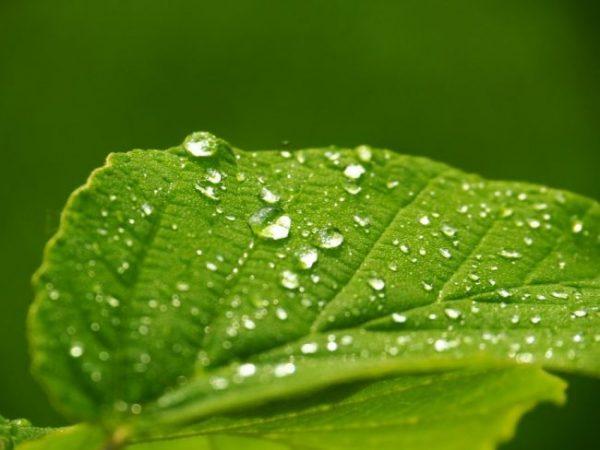 come far risparmiare acqua alle piante