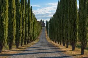 alberi resistenti al vento