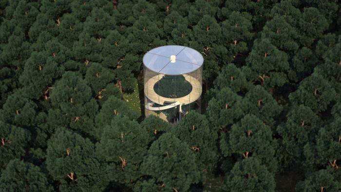 casa attorno all'albero