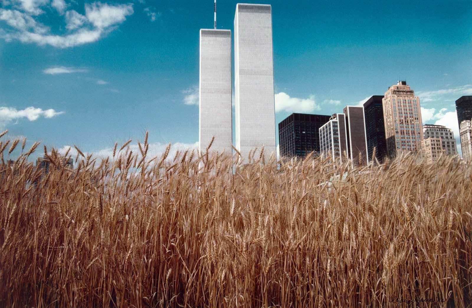 wheatfield campo di grano agnes denes manhattan twin towers