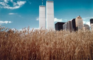 wheatfield campo di grano agnes denes manhattan twin towers