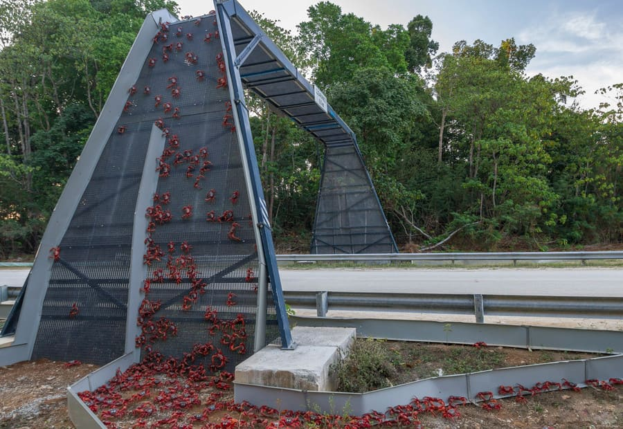 attraversamenti per animali - i ponti salva-granchi di Christmas Island