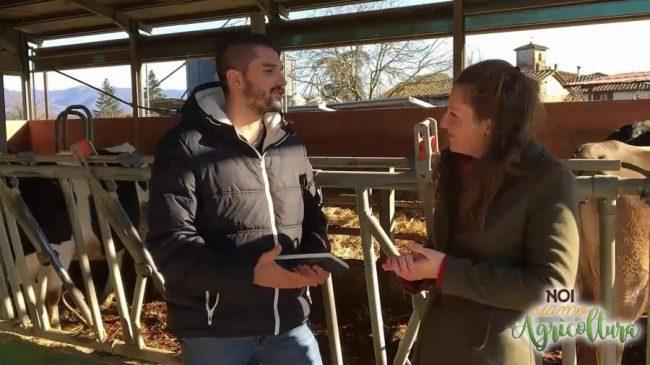 settore bovino da latte