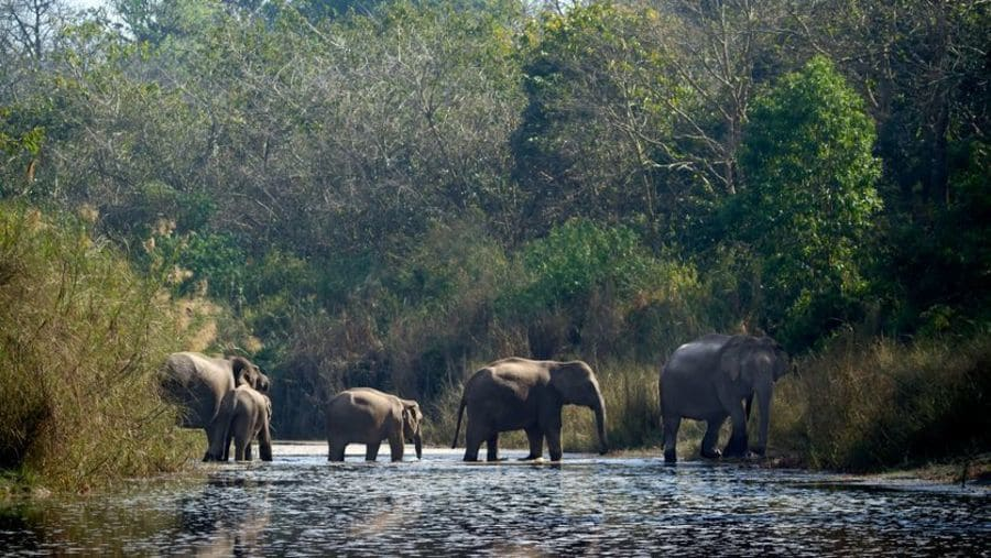 attraversamenti per animali - Terai Arc Landscape Tra India e Nepal