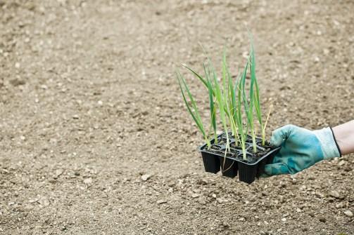 cosa coltivare a gennaio