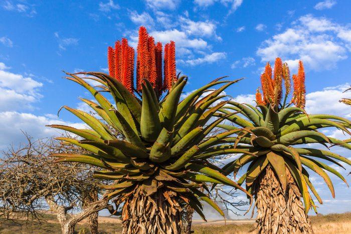 piante resistenti al vento e alla salsedine