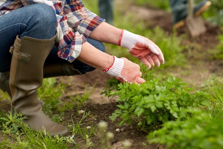 fusione tra Bayer e Monsanto