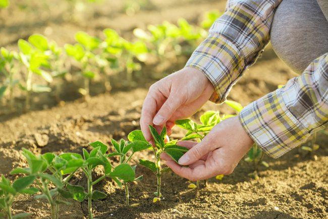 cosa coltivare a marzo