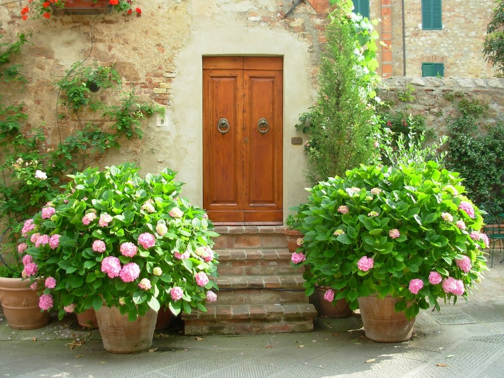 Coltivare ortensie in vaso e in giardino avrai fiori for Ortensie in vaso
