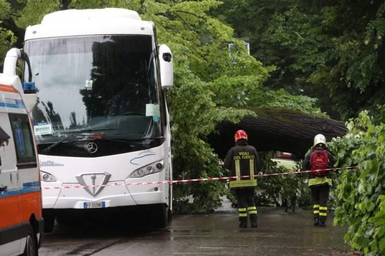 albero su bus firenze