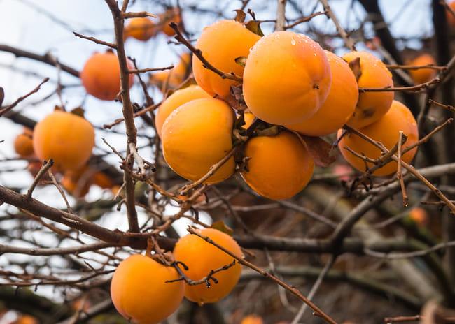 caco mela persimmon