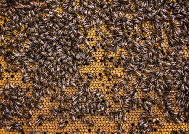La vita delle api nell'alveare