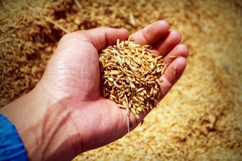 arrivo delle tecnologie 4.0 in agricoltura.