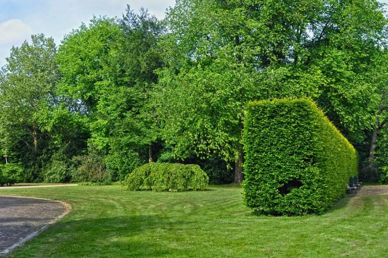 Siepi da giardino immagini 10 piante per siepi da for Migliori piante da terrazzo