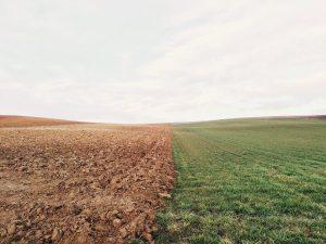 Come misurare il ph del terreno