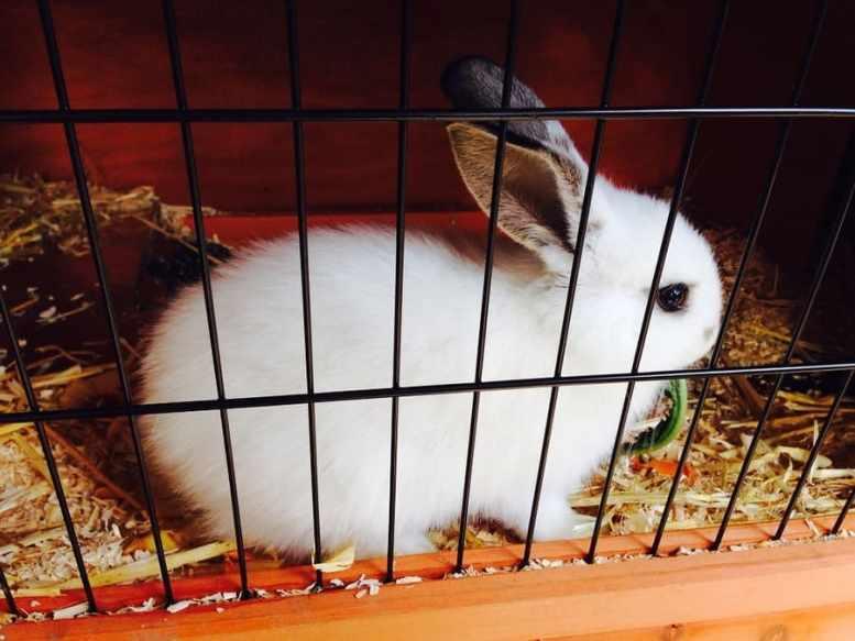 gabbietta per coniglio