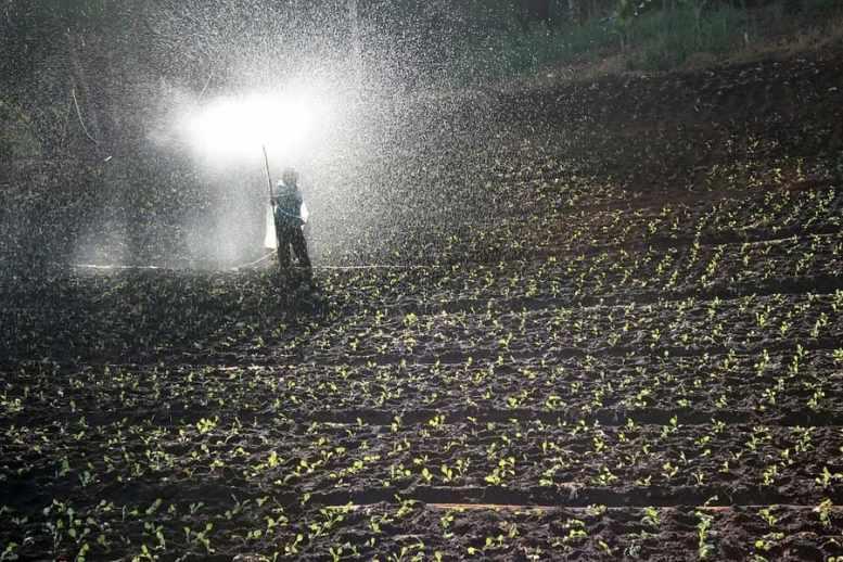 prodotti fitosanitari