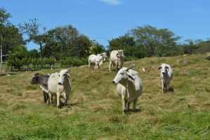 allevamento animali liberi