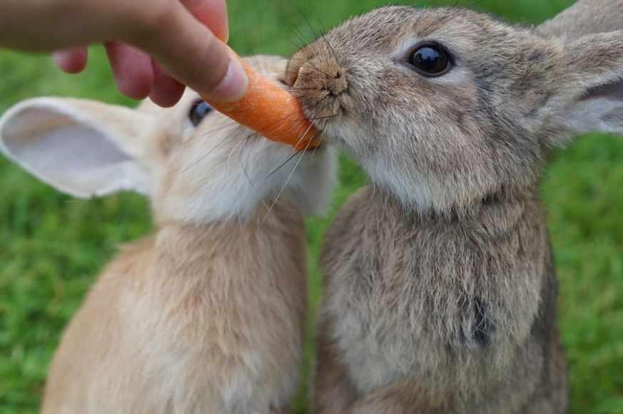 Prendersi Cura Di Un Coniglietto Appena Nato