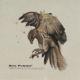 Album Review: Hello Piedpiper - Birdsongs = Warsounds, puristisch und ehrlich aus Deutschland