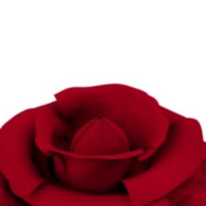 rose_Stuart Miles