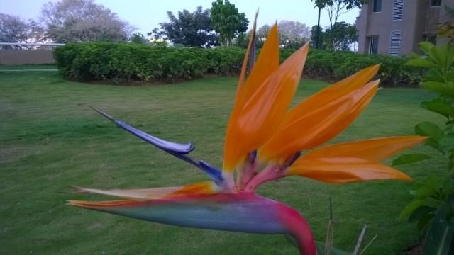 Lumia 1320 color