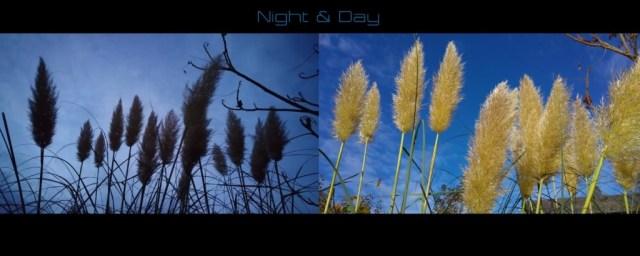 Lumia 950 daylight vs night