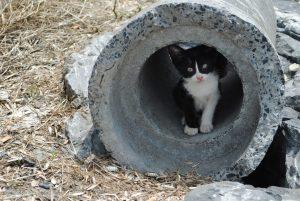 cat-in-a-tube_w725_h487