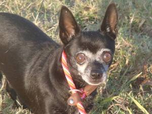 Tuti is a Senior currently waiting for a new family at PACC